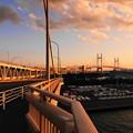 Photos: 200205_61Y_夕景・RX10M3(大黒大橋) (85)