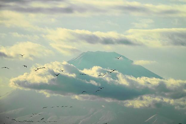 200211_31T_水鳥さん・富士山・RX10M3(茅ヶ崎海岸) (5)