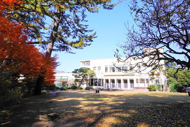 Photos: 191212_α14_芝庭園の様子・S1018(庭園美術館) (6)
