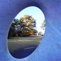 Photos: 191212_α12_芝庭園の様子・S1018(庭園美術館) (3)