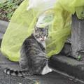 Photos: 210522_03N_外猫ちゃん・RX10M3(近隣) (1)