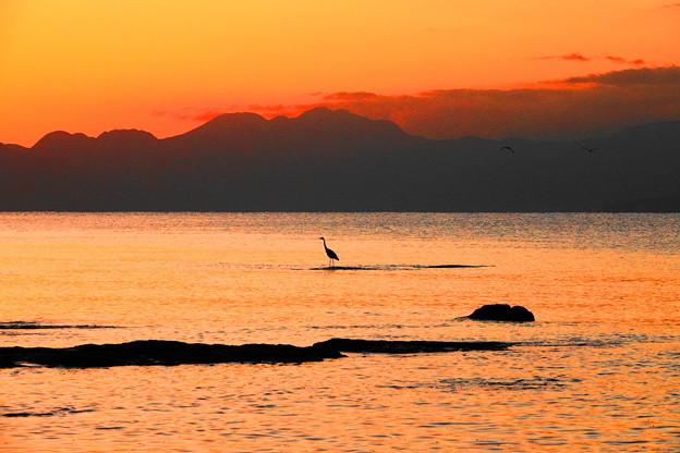 191121_R51_夕景とアオサギ・RX10M3(江の島) (16)