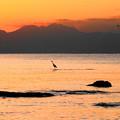 191121_R51_夕景とアオサギ・RX10M3(江の島) (21)