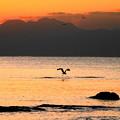 Photos: 191121_R51_夕景とアオサギ・RX10M3(江の島) (31)