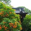 Photos: 190709_21M_境内の様子・S18200(妙本寺) (91)