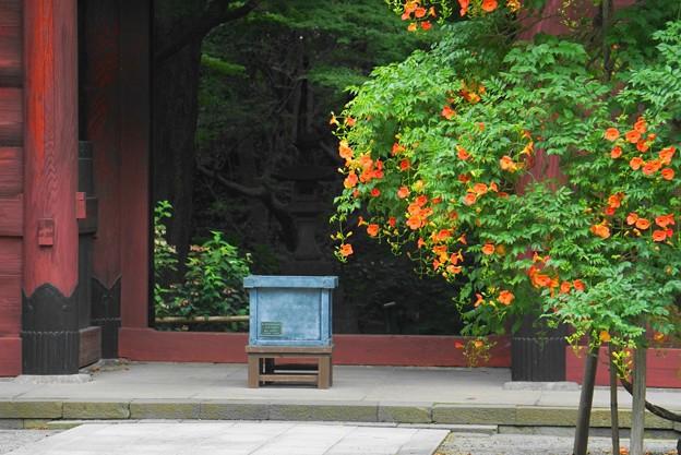 190709_21M_境内の様子・S18200(妙本寺) (116)