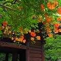 Photos: 190709_21M_境内の様子・S18200(妙本寺) (83)