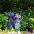 Photos: 180607_N02_花菖蒲を・S18200・α60(明月院) (4)