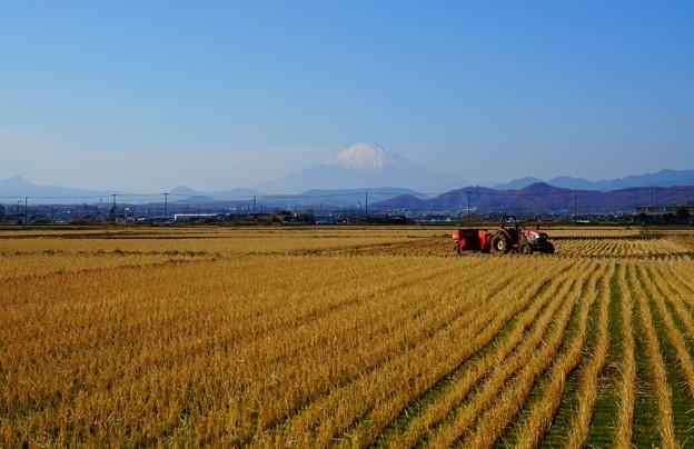 Photos: 191216_L04_富士山と田んぼ・S18200(平塚) (21)