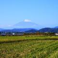 191121_R02_富士山・RX10M3(平塚) (9)