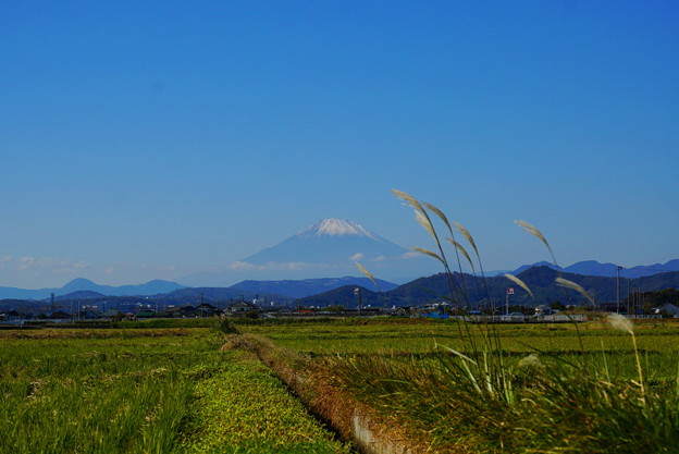 Photos: 191121_S05_尾花と富士山・S1655G(平塚) (26)