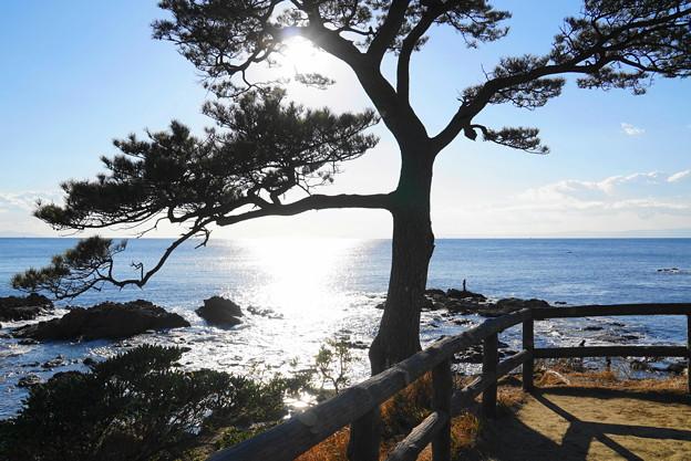 190103_53_風光明媚な海岸・S18200(秋谷海岸) (16)