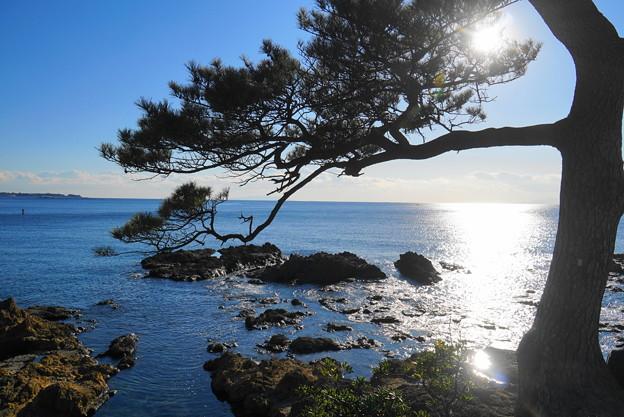 190103_53_風光明媚な海岸・S18200(秋谷海岸) (4)