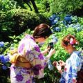Photos: 190613_Y12_浴衣でお花見・S18200(明月院) (2-1E)