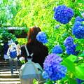 Photos: 190613_12D_大混雑の境内・S18200(明月院) (45-1)