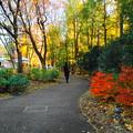 191212_α28_西洋庭園の様子・S1018(庭園美術館) (4)