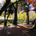191212_α15_西洋庭園付近・S1018(庭園美術館) (14)