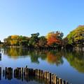 Photos: 201113_02S_池のある風景・RX10M3(洗足池) (6)