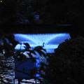 Photos: 200802_22F_夕方の噴水・RX10M3(等々力) (8-1)