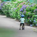 Photos: 200608_17A_紫陽花ロードを・RX10M3(矢上川) (97)