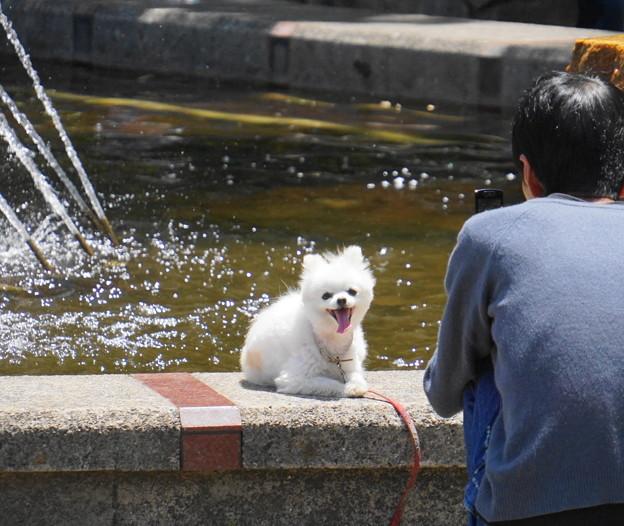180520_02_噴水を背景に・ワンちゃん・S18200・α60(公園) (3-1)