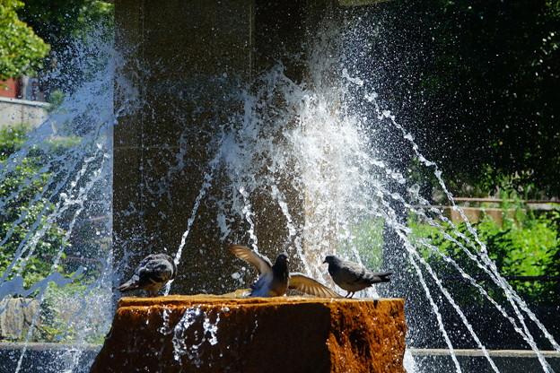210819_08F_噴水と鳩さん・RX10M3(公園) (76)