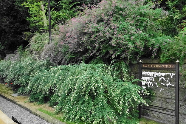 190928_72H_萩が綺麗・RX10M3(西方寺) (4)