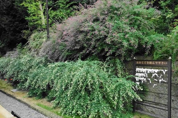 Photos: 190928_72H_萩が綺麗・RX10M3(西方寺) (4)