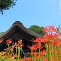 Photos: 190925_23H_花の寺・S18200(西方寺) (9)
