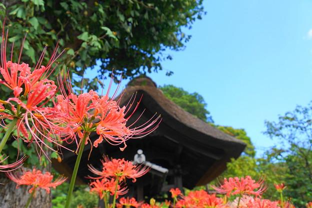 190925_23H_花の寺・S18200(西方寺) (23)
