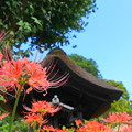 Photos: 190925_23H_花の寺・S18200(西方寺) (23)