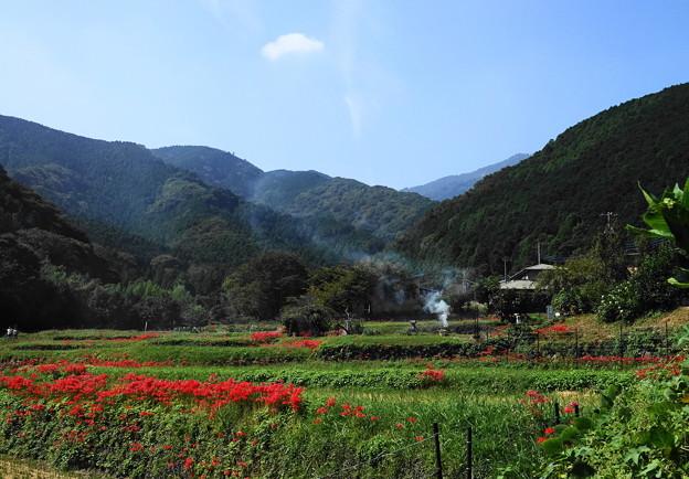 191002_S01_里山にたなびく・RX100M3(日向薬師) (3)