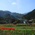 Photos: 191002_S01_里山にたなびく・RX100M3(日向薬師) (3)