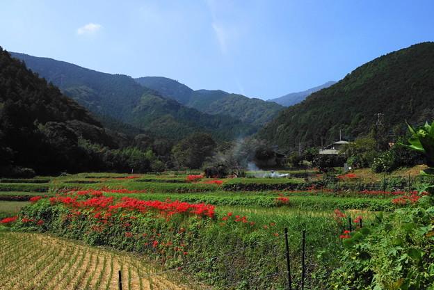 191002_S01_里山にたなびく・RX100M3(日向薬師) (4)