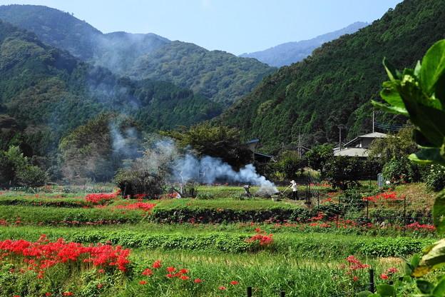 191002_S01_里山にたなびく・RX100M3(日向薬師) (6)