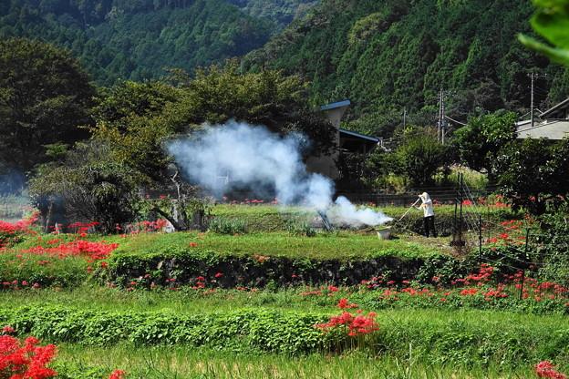 191002_S01_里山にたなびく・RX100M3(日向薬師) (1)