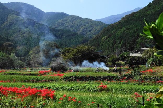 191002_S01_里山にたなびく・RX100M3(日向薬師) (2)