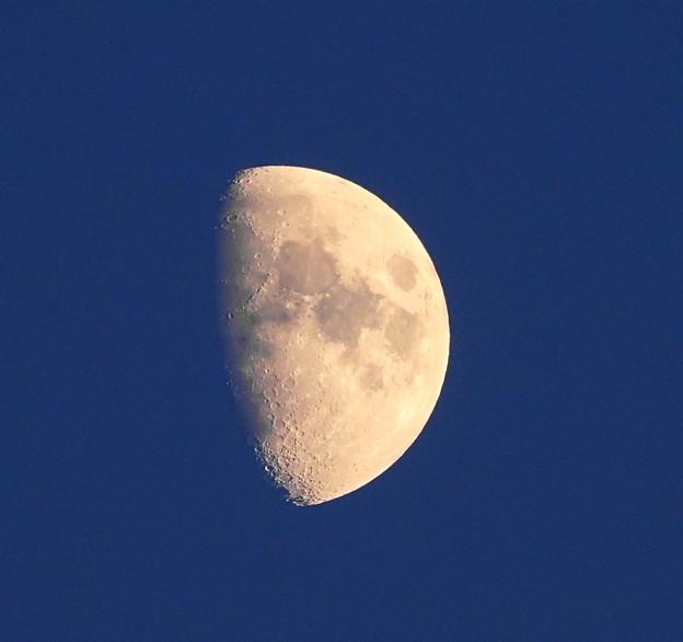 Photos: 210915_54T_夕方の月・上弦の月の翌日・RX10M3(近隣) (4-1)