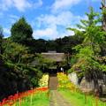 Photos: 210916_21S_彼岸花のお寺・RX10M3(西方寺) (45)