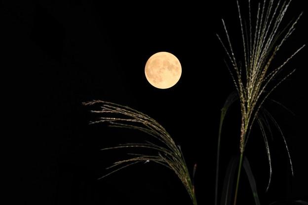 201001_63Y_24・中秋の名月・62S_4・ススキ・RX10M3(近隣)