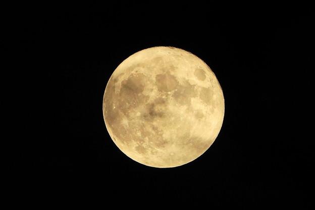 Photos: 210921_61T_十五夜の月・RX10M3(近隣) (25)