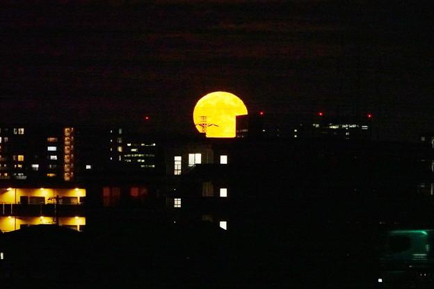 210921_51T_十五夜の月・RX10M3(鶴見川) (5)