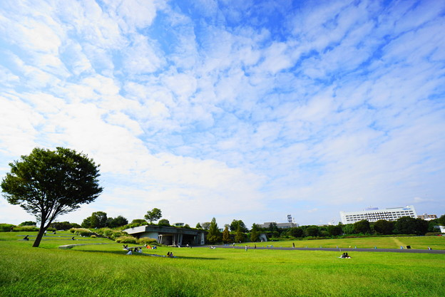 210927_03H_夢広場の様子・S1018(昭和記念公園) (3)