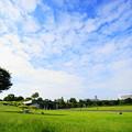 Photos: 210927_03H_夢広場の様子・S1018(昭和記念公園) (3)