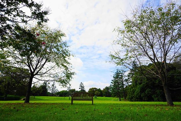 210927_02H_花の丘・S1018(昭和記念公園) (238)