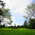 Photos: 210927_02H_花の丘・S1018(昭和記念公園) (238)