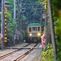 180607_52_江ノ電と紫陽花・S18200・α60(御霊神社付近) (2)
