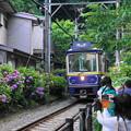 180607_51_紫陽花と江ノ電・S18200・α60(御霊神社) (5)