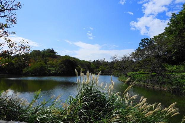 191007_09N_中の池・RX10M3(三つ池)