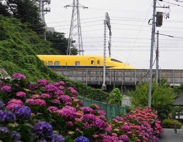 180528_21_紫陽花・S18200・α60(矢上川) (21)